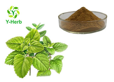 China 100% Pure Natural Melissa Officinalis Leaf Powder Lemon Balm Extract supplier