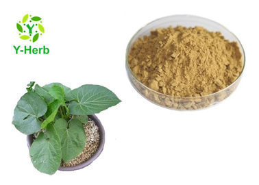 China Organic Solvent Kavalactone Extract Powder Kava Kava Root Extract CAS 9000-38-8 supplier