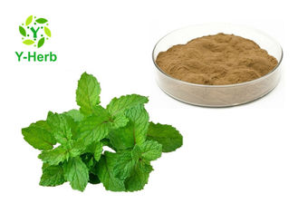Anti Inflammatory Ingredients Mentha Arvensis Mint Powder Peppermint Leaf Extract