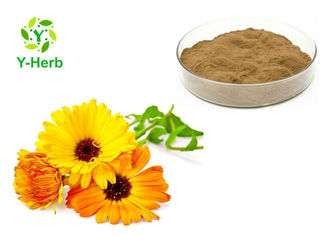 Calendula Officinalis Extract Natural Cosmetic Ingredients Pot Marigold Flower Powder