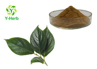 Watersoluble Organic Diospyros Kaki Leaves Powder 10:1 Bulk Persimmon Leaf Extract