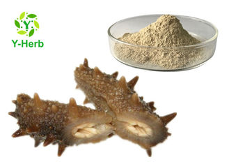 China Sea Cucumber Intestinal Protein Peptide Powder Stichopus Japonicus Extract supplier