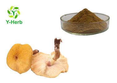Honey Agaric Mushroom Extract Powder P.E. 30% Armillaria Mellea Polysaccharides Ingredients