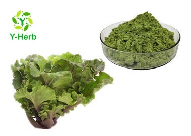 China Collard Leaf Vegetable Extract Powder Purple Green Curly Kale Juice Concentrate Powder supplier