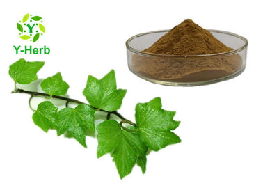 Cosmetic Field Ivy Leaf Extract Hederacoside C Yellow Brown Fine Powder