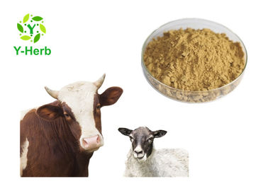 China Pure Freeze Dried Sheep Testicular Powder Lyophilized Ox Bovine Testes Extract supplier