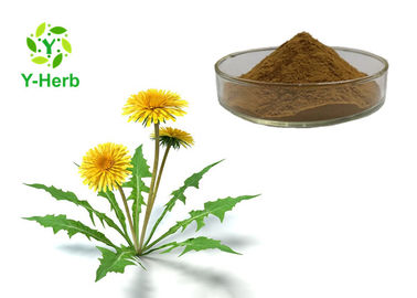 Anti Arrhythmias Organic Plant Extracts Dandelion Leaf Extract Water Soluble