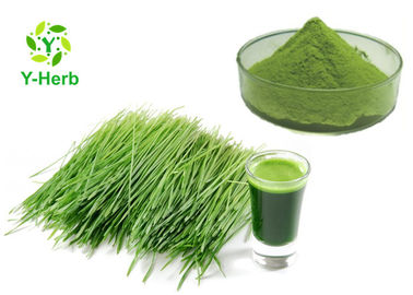 China Wheatgrass Vegetable Extract Powder Green Wheat Grass Juice Concentrate Powder distributor