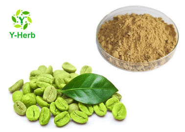 China Green Coffee Bean Extract Powder 50% For Loss Weight Chlorogenic Acid distributor