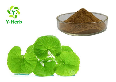 China Herb/Leaf Gotu Kola Extract Asiaticosides Powder 20% 90% Centella Asiatica P.E. factory