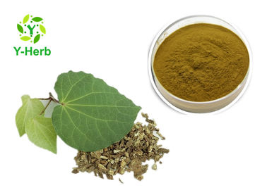 China Medicinal Kava Kavalactone Extract Powder 30% 70% Pure Piper Methysticum Extract distributor