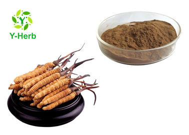 China Pure Cordyceps Sinensis Extract Powder Polysaccharides 10%-50% Adenosine 0.5%-5% distributor