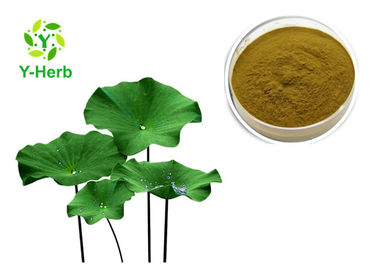 China Lotus Leaf Extract Nuciferine Powder Pure Nelumbo Nucifera Leaves HPLC 2%-98% factory