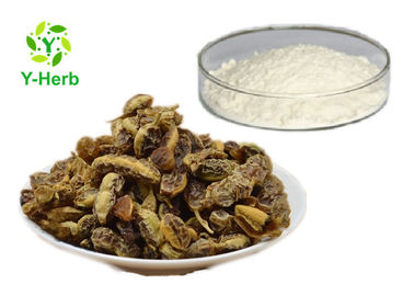 China CAS: 446-72-0 Natural Fructus Sophorae Extract Genistein Powder 98% Manufacturer factory