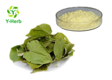 China Epimedium Sagittatum Leaf Extract Icariin Powder Epimedium Brevicornum Maxim P.E distributor