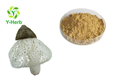 China UV Test Dictyophora Indusiata Extract Tumor Inhibitor Bamboo Fungus Pith Powder factory