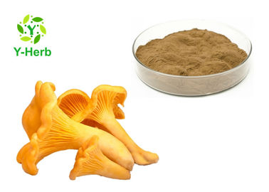 China 10% 30% Chantarelle Mushroom Extract Powder Yellow Brown Color Anti Oxidant factory