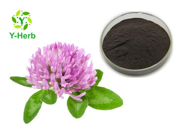 China 80 Mesh Herbal Red Clover Blossoms Extract Powder 20% Isoflavones Powder HPLC factory