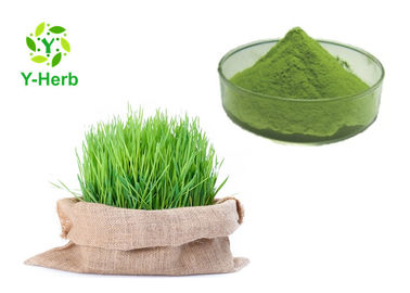 China Spray Drying Fresh Wheat Grass Juice Powder Water Soluble Cool Dry Place Storage factory