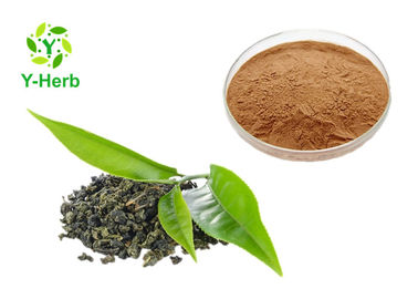 China Anti Radiation Green Tea Extract EGCG 90% 98% Polyphenols Powder Improve Immunity factory